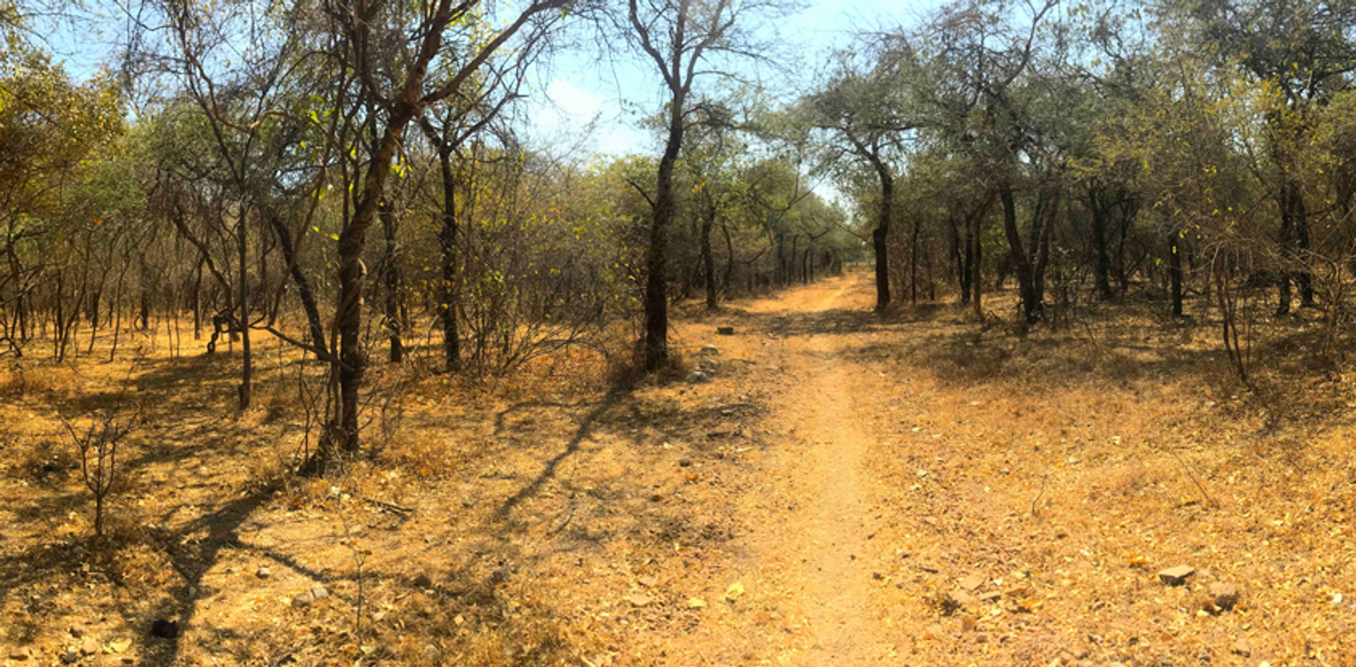 PANORAMA-FOREST-DRY-SCENERY-RAJASTHAN-HI