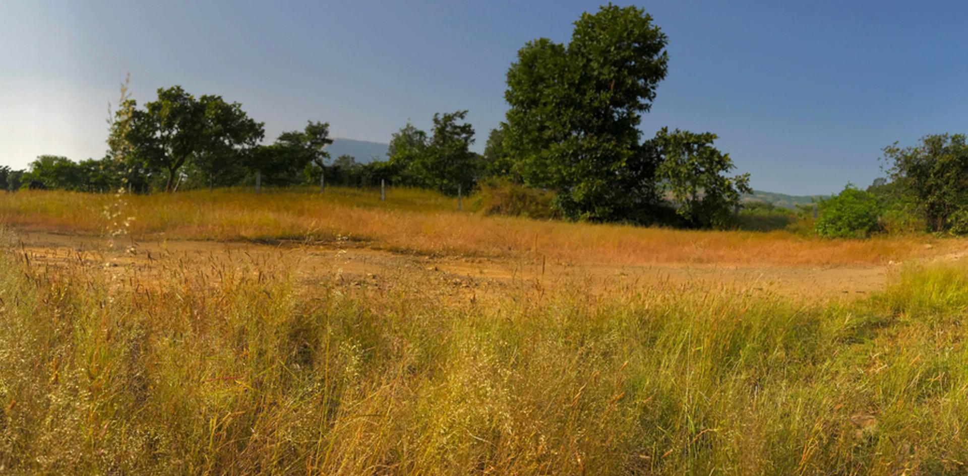 PANORAMA-WESTERN-GHATS-GRASS-CATTLE_.jpg