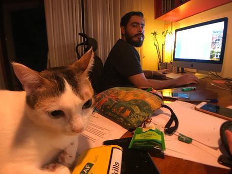 #chhorey #brainstorming #deadline #midnightoil #working #writing #cats #rumi #awareness
