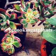 @pplookingatplants