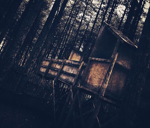 forest-4.jpg