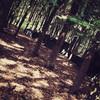 forest-2.jpg