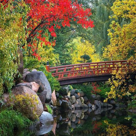 [여행지/일리노이 Rockford/정원] Anderson Japanese Garden