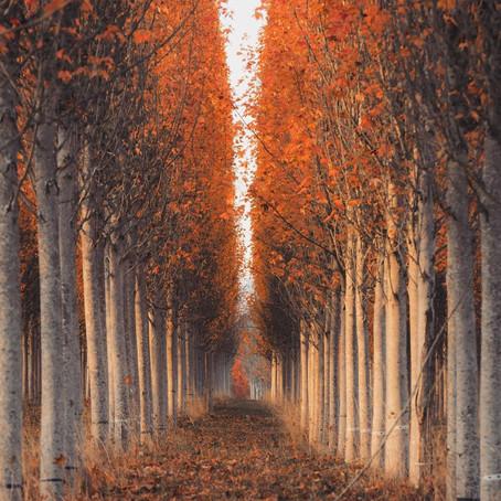 [여행지/오레곤 Forest Grove/나무 농사] Tree Farms