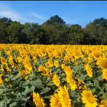 [여행지/버지니아 Nokesville/농장] Burnside Farms