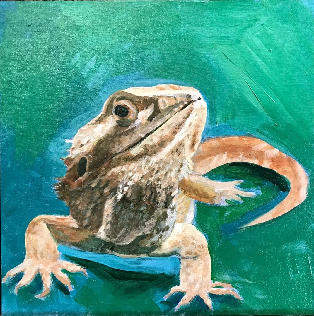 6x6 bearded dragon portrait