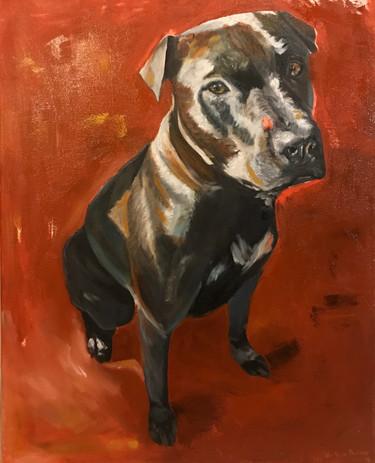 12x16 dog portrait