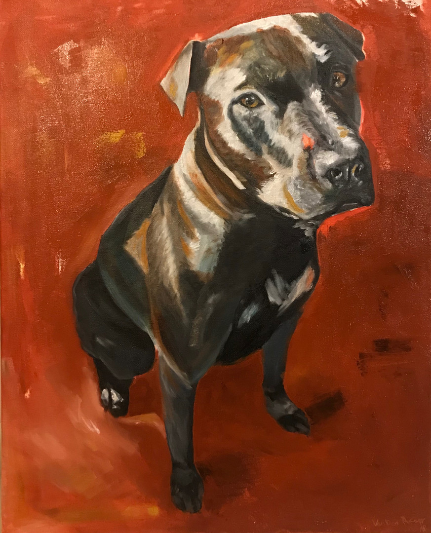 12x16 dog portrait