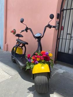 Spring Time at NOLA Cycles