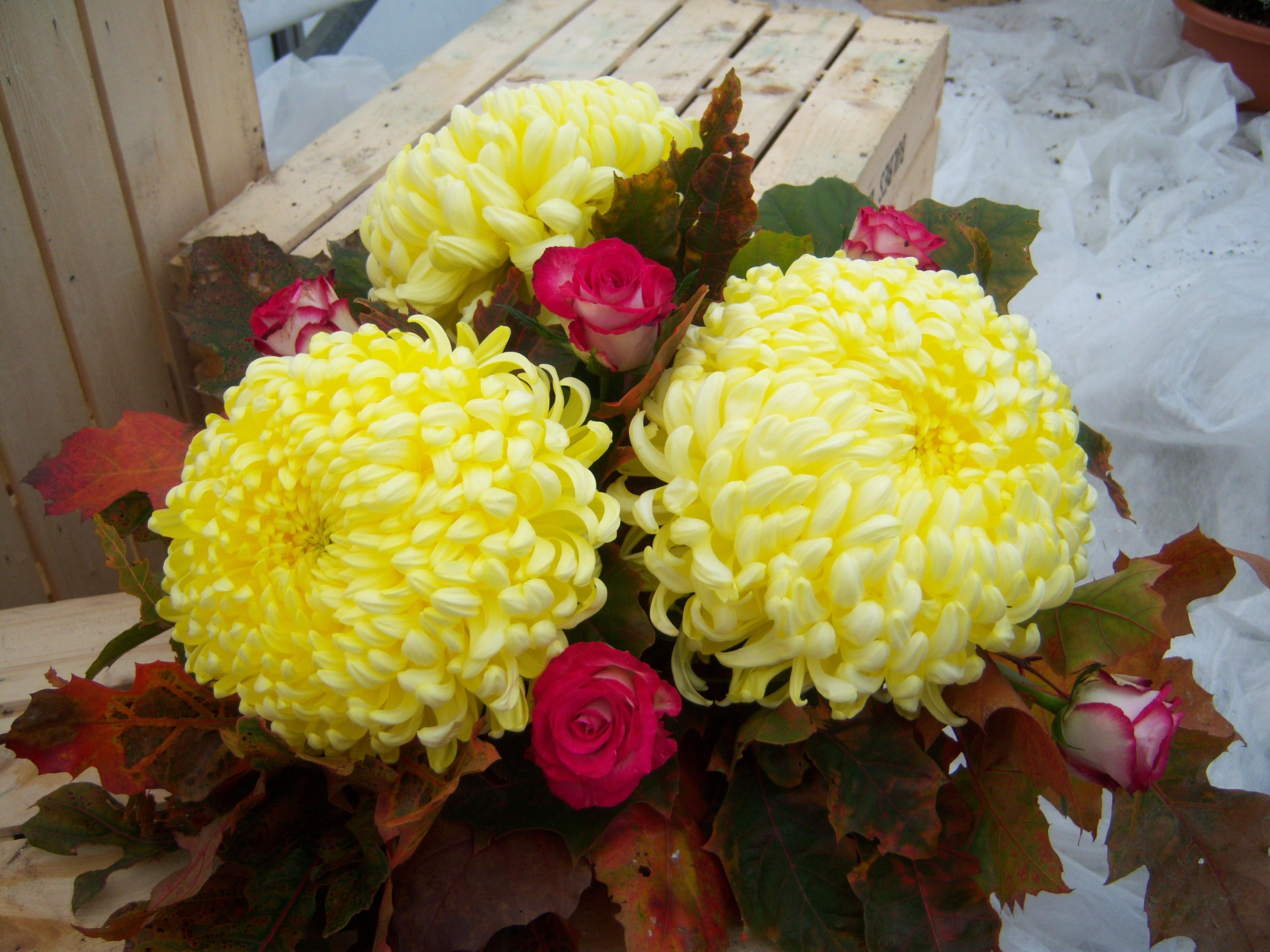 3 fleurs + roses