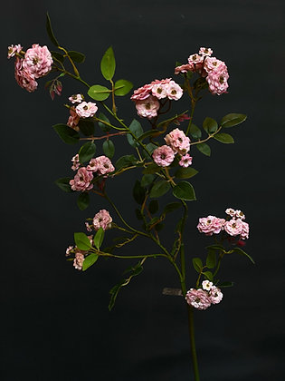Rozen tak roze