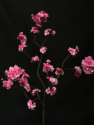 Bloesem tak roze