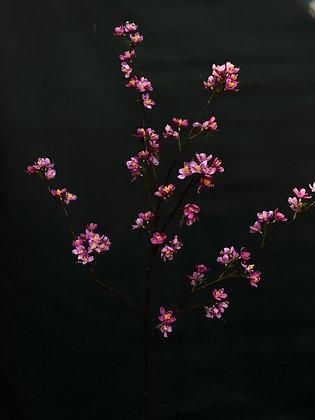 Bloesemtak roze