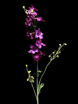 Delphinium lavendel