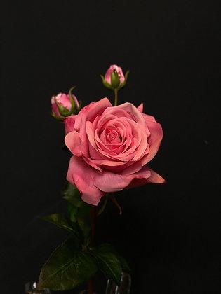 Roos exclusief roze