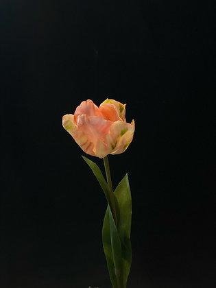 Franse van Gogh tulp