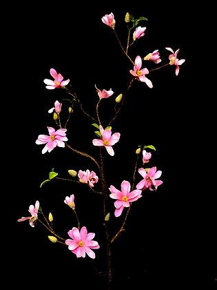 Magnolia roze