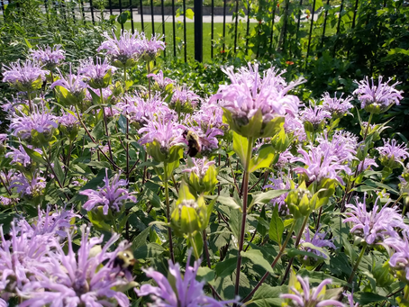 Always something in the garden