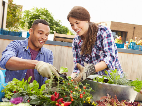 Building Your Own Urban Vegetable Garden at Home