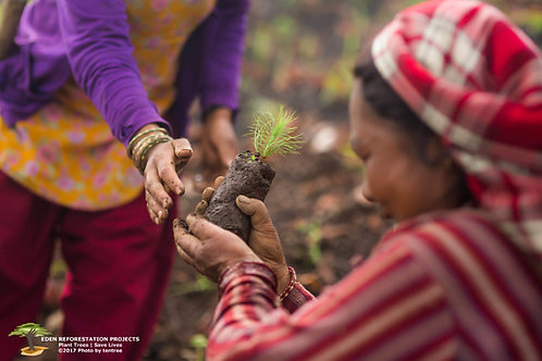 Plantation d'un arbre à l'international