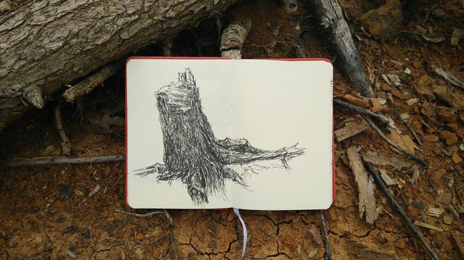 Whisper in the woods