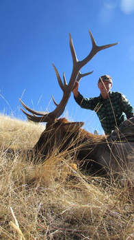 Elk Hunting, Montana Hunting, Outfitter, Montana West Outfitters