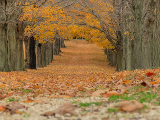 What can businesses learn from leaves falling?