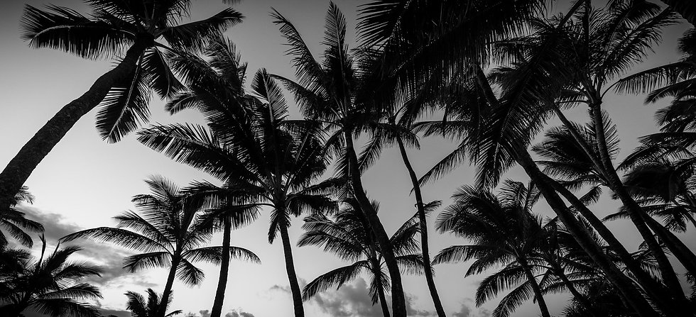 Many Palms B&W
