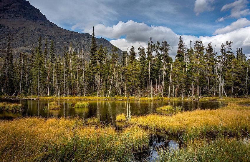 Lake of Amber
