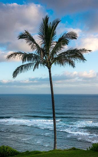 Singe Palm