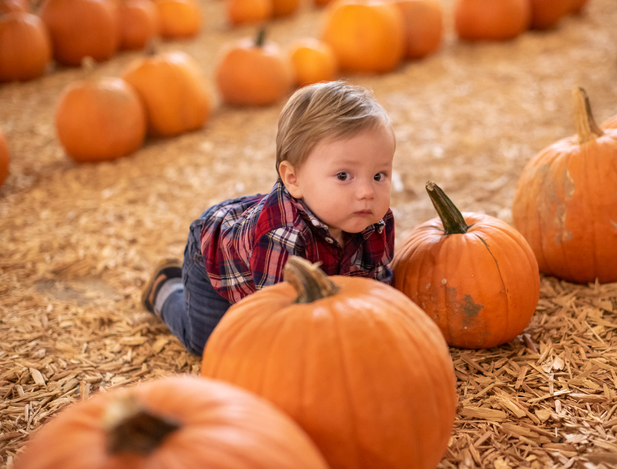 R&S Pumpkin Patch-8488.jpg