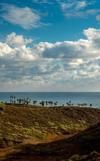 Palm Row - San Clemente