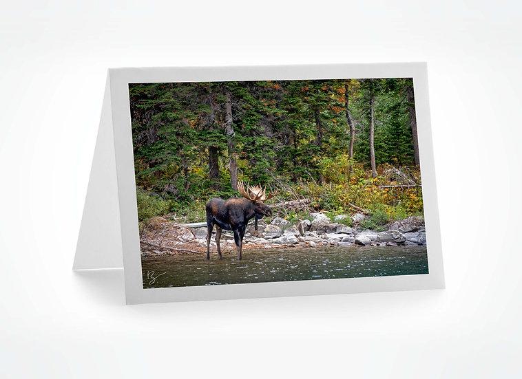 Moose at Lake Josephine