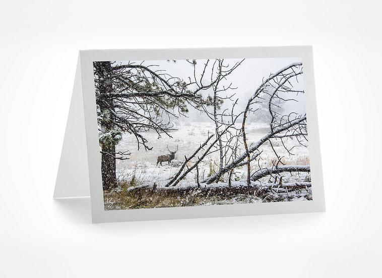 Elk in a Snow Storm