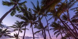 •_SM_Hawaii_FINALS-6559.jpg