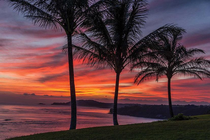 Palms of Kawaii