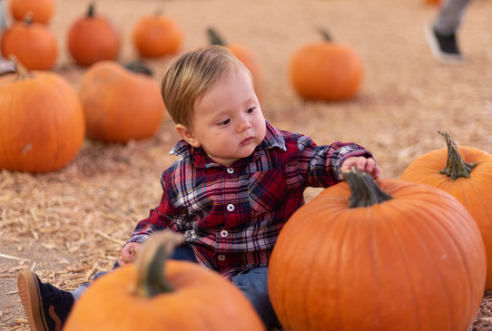 R&S Pumpkin Patch-8245.jpg