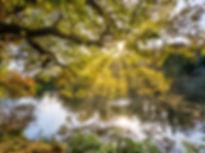 Naturopathie, naturopathe, Montréal, Sainte-Adèle, Lauentides, Ste-Adèle, ANAQ, cours, conférence, alimentation saine, épicerie, santé, La Vitaliste, Marik Péro, calme, nature, paix, soleil, eau, lac, vie, saté globale, abondane, émergence, horizon