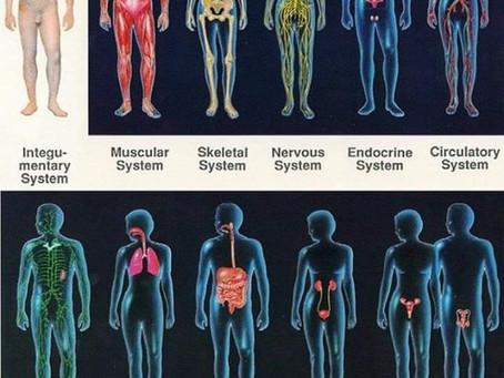 Globalité de l'ostéopathie et les systèmes du corps expliqués par votre ostéo de Champhol-Chartres