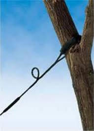 Tree-Cabling-NJ.jfif