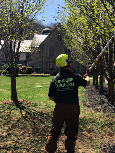 NJ-Tree-Care-Services.jpg