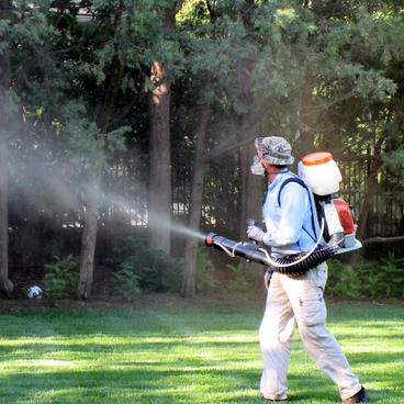 Tree-Spraying-NJ-.jpg