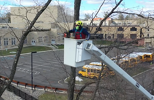 New Jersey Tree Pruning