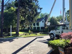 Tree-Service-Basking-Ridge-NJ.jpg