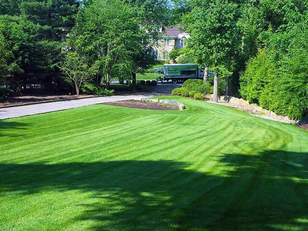 Organic Lawn Care Company