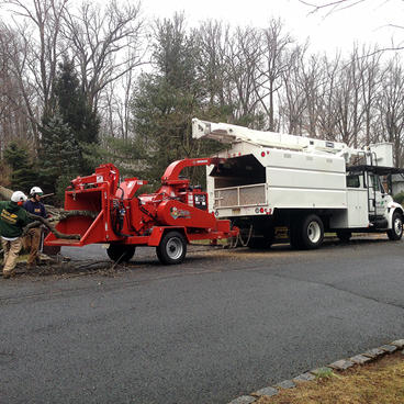 Tree-Removal-Service-NJ.jpg