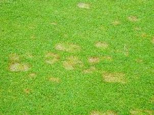 New Jersey Lawn Disease Treatment