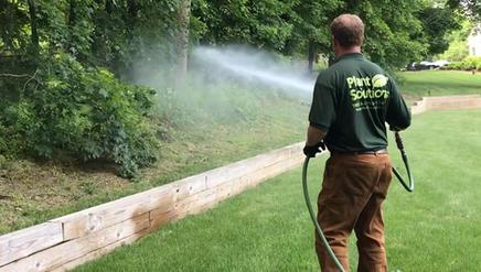 Spraying-Tree-Expert-NJ-.jpg