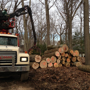 Tree-Clearing-NJ.jpg