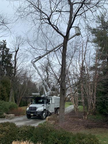 Tree-Service-Somerset-NJ.jpg